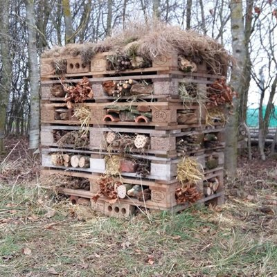 A bug hotel in a wooded area