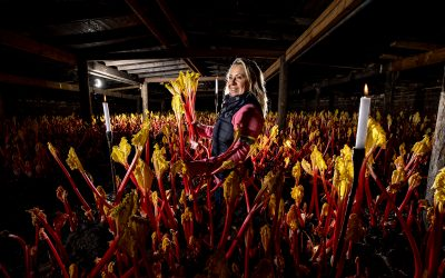 A Deliciously Yorkshire Tradition – Introducing Annabel's Forced Rhubarb