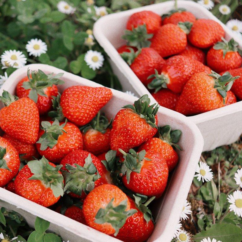 Annabel Makin-Jones in a Strawberry Farm